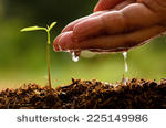 stock-photo-seeding-seedling-male-hand-watering-young-tree-over-green-background-seed-planting-225149986